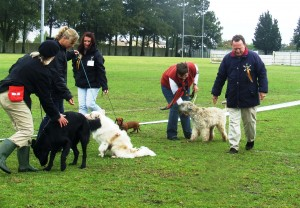 Kevin judging Best Junior in Show at an All Breeds show in Cape Town, September 2013