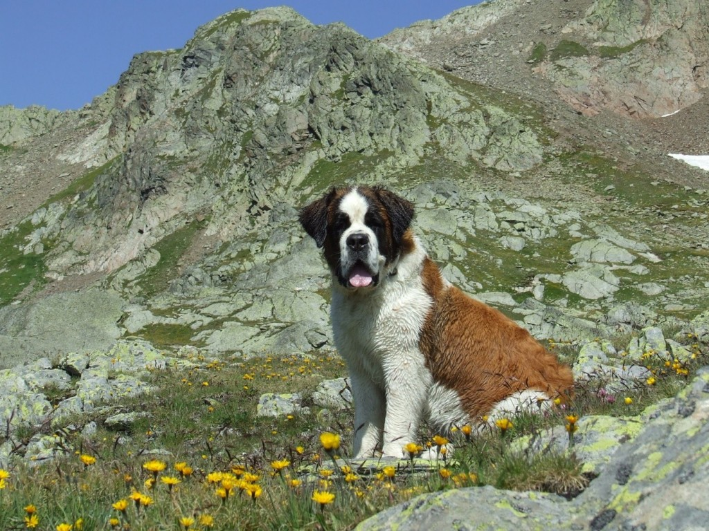 dog-in-mountains