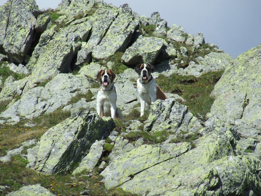 dogs-in-mountains